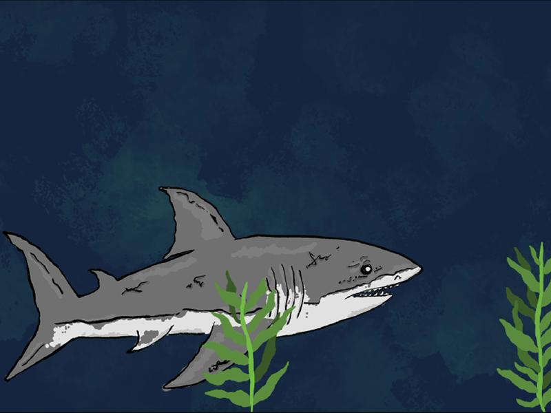 Shark Animation-Explainer Animation